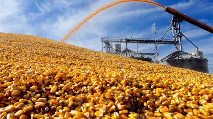В Ставропольском крае построят завод по глубокой переработке кукурузы