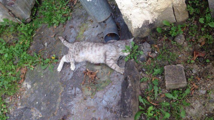 Неизвестные в Кисловодске расстреляли котов из пневматического пистолета