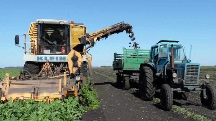 На Ставрополье идёт активная уборка свёклы и овощей