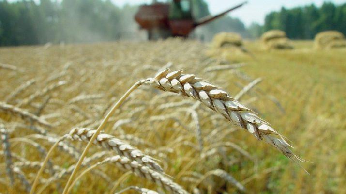 На Ставрополье прибудут аграрии со всего мира