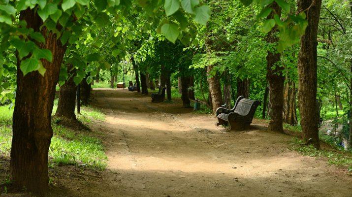 В Кисловодском парке проведут бесплатные экскурсии