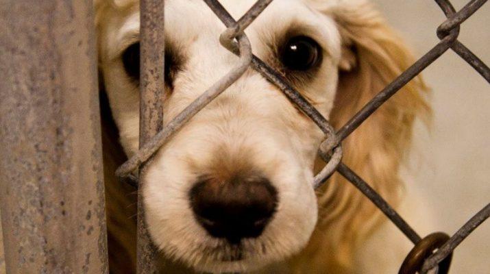 Жители Кисловодска требуют прекратить массовую травлю животных в городе