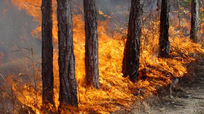 Лесных пожаров на Ставрополье стало в два раза меньше