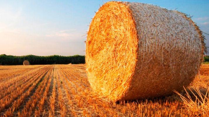 Программа льготного кредитования аграриев набирает обороты на Ставрополье